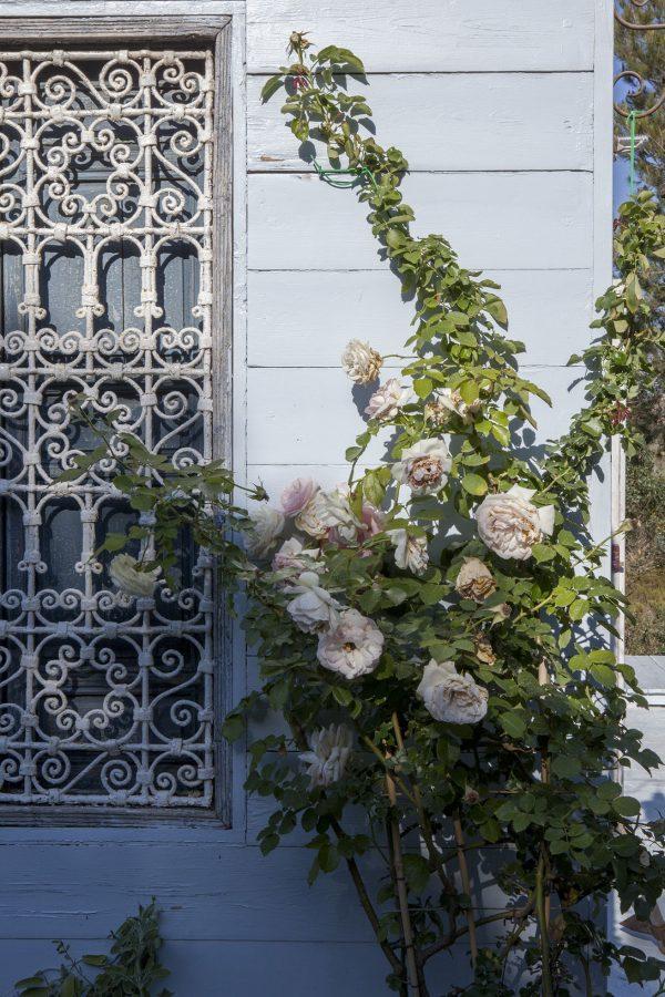 Fiori sulle pareti di Casadisale Yoga Resort a Carloforte